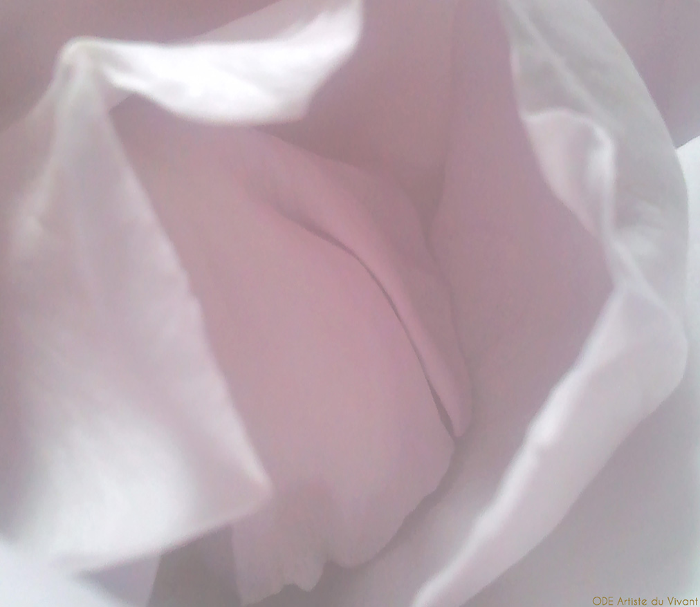rose artiste du vivant